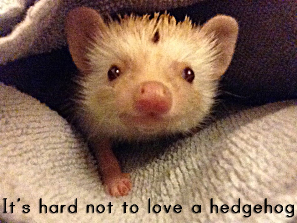 It's hard not to love a hedgehog (vol. 1)