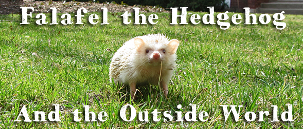 Falafel the Hedgehog and the Outside World