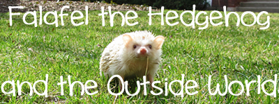 falafel-hedgehog-outside