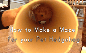 How to make a maze for your pet hedgehog